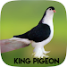 Download King Pigeon 1.9.5 APK
